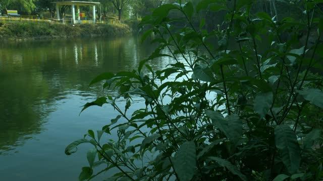 Indian natural environment video clip