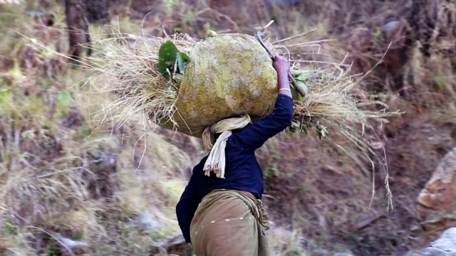 インド村の女性が彼女の頭の上の草を運ぶします。 - ネパール人点の映像素材/bロール
