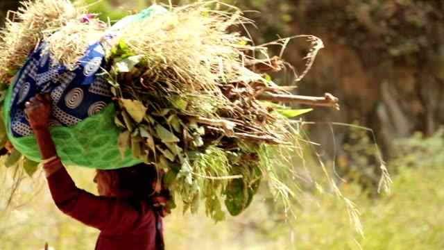 インドの女性が彼女の頭の上の草を運ぶします。 - ネパール人点の映像素材/bロール