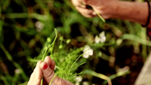 Indian women picking green coriander and holding bunch in hands at the organic farm. Indian women picking green coriander and holding bunch in hands at the organic farm. herb stock videos & royalty-free footage
