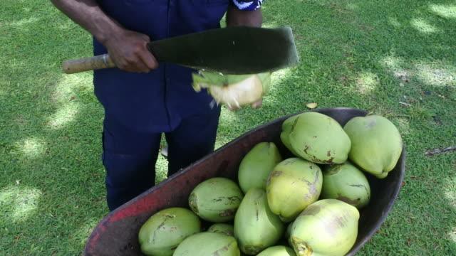 Indigenous Fijian man peels coconut with machete knife in Fij video