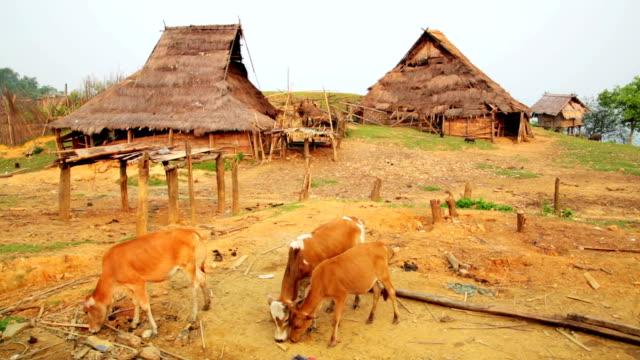 Indigenous native tribal culture of Akha tribe village, Pongsali, Laos video