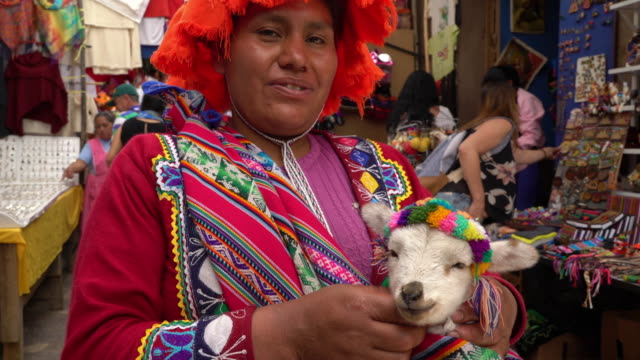 indigene peruanische frau mit baby alpaca in pisac markt, cusco - peru stock-videos und b-roll-filmmaterial