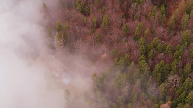 Indistinct Buildings in Forest Through Fog - Aerial View video