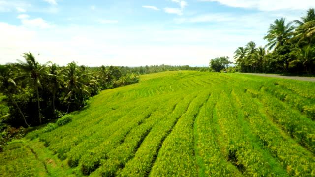 widok wsi w indonezji - taras ryżowy filmów i materiałów b-roll