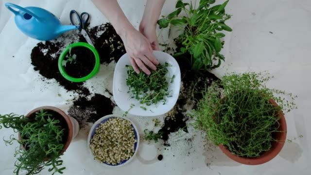 vídeos de stock e filmes b-roll de indoor microgreens and garden room concept - fitoterapia