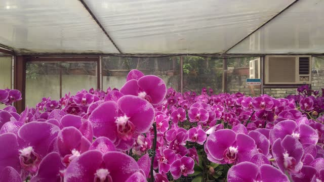 Indoor orchid farm in Malaysia for export