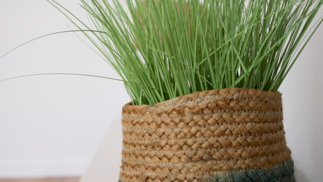 Indoor Plant In Basket - Home Decor