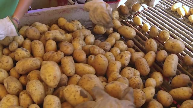 industrial division between clean and dirty potatoes quality control system industrial division between clean and dirty potatoes quality control system side lit stock videos & royalty-free footage