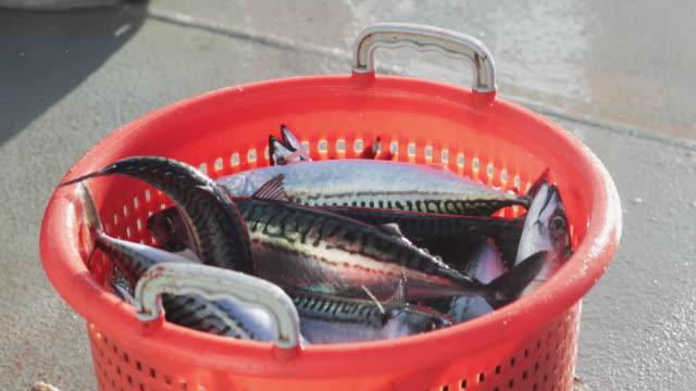industrielle fischerboot: großer fang von fischen - fang stock-videos und b-roll-filmmaterial