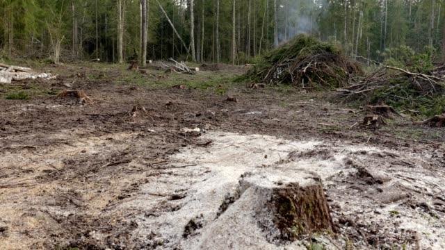 Industrial logging leading to environmental degradation - video