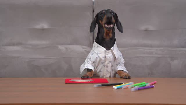 vídeos de stock e filmes b-roll de initiative dachshund dog in white shirt put holiday card on table with colored pencils to write congratulations and pleasant wishes to its beloved, front view. - mesa mobília