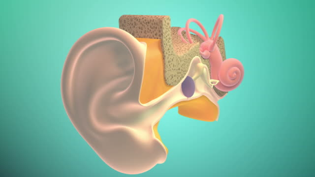 3d. inner ear or internal ear 4k. ultra hd. - orecchio umano video stock e b–roll