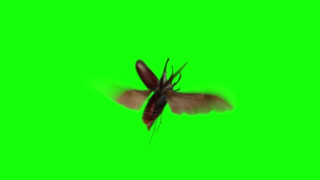 Insect Animations for Compositing Four options of different insect species flying across the frame over a green background, with sound effects. Includes a small swarm of locusts, a rhinoceros beetle, a swarm of mosquitos, and orange sulfur butterfllies. butterfly insect stock videos & royalty-free footage