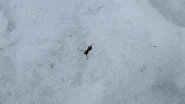 insetto inizio della primavera - torace animale video stock e b–roll