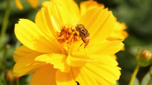insect gathering pollen from flower. insect gathering pollen from flower. arthropod stock videos & royalty-free footage