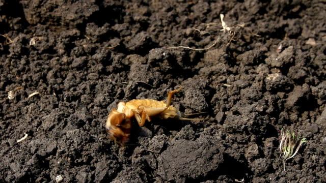 insekt leben in der welt. - schnauze stock-videos und b-roll-filmmaterial