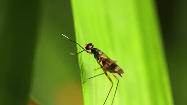 Insect on green leaf in nature.