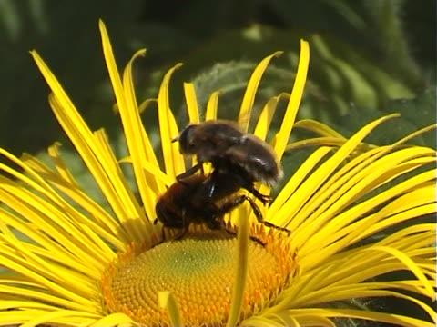 insect sex - bi insekt bildbanksvideor och videomaterial från bakom kulisserna