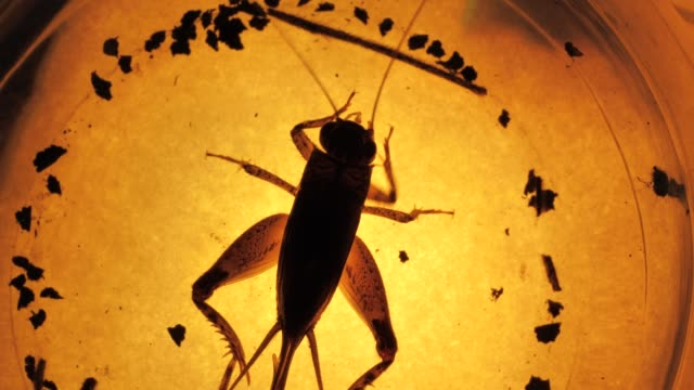Insect Insect analysis in a lab close up parasitic stock videos & royalty-free footage
