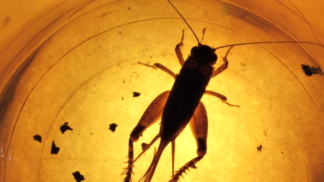 Insect Insect analysis in a lab close up flea insect stock videos & royalty-free footage