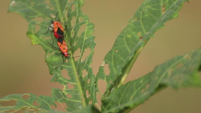 stockvideo's en b-roll-footage met insect - arthropod