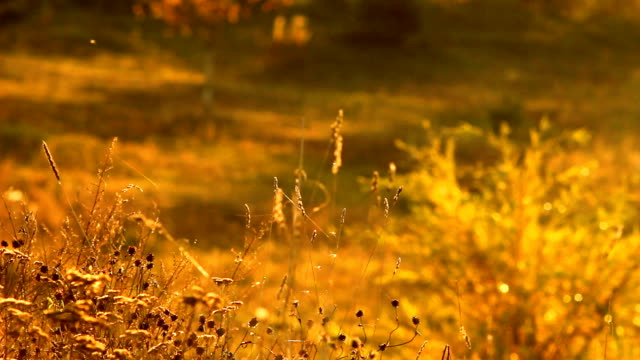 Insects on autumn meadow video