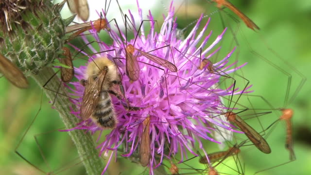hd: insects on flower (video) - pollinering bildbanksvideor och videomaterial från bakom kulisserna