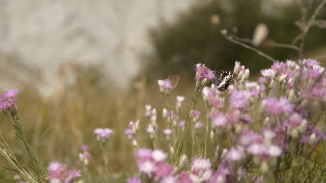 insects on wild flowers sway in the wind - farfalla ramo video stock e b–roll