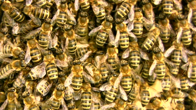Inside a crowded beehive video