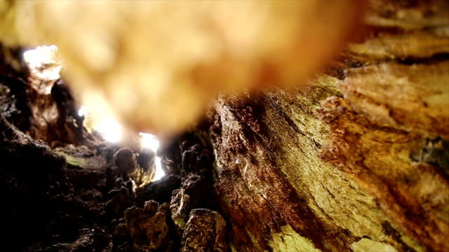 Inside a hollow tree