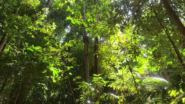 森の中には、緑豊かな葉と美しい日差しの高い木々があります。パンショット。 - マレーシア点の映像素材/bロール