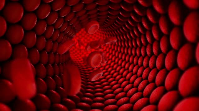 vídeos de stock e filmes b-roll de inside of human vein. loopable. bloow flow. - artéria