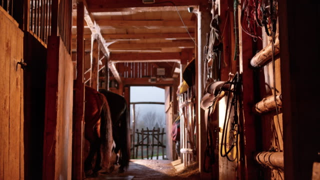 DS Inside the horse's stable in sunshine Medium dolly shot of the inside of the horse's stable on a sunny day. barns stock videos & royalty-free footage