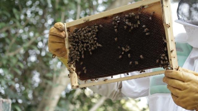 Inspecting Honey bee macro footage of bee hive and apiarist beekeeper video