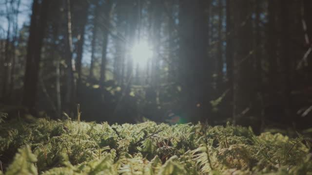 in i skogen - norge bildbanksvideor och videomaterial från bakom kulisserna