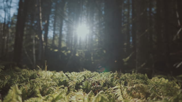 vídeos de stock e filmes b-roll de into the forest - noruega