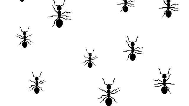 Invasion of ants video