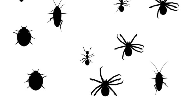 Invasion of arthropods video
