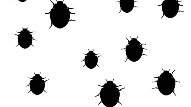 Invasion of beetles video