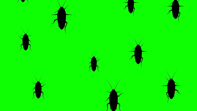 invasion of cockroaches - insetto video stock e b–roll