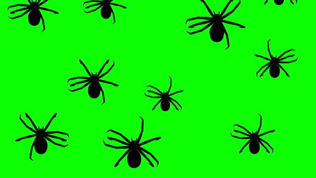 invasionen av spindlar - spindel arachnid bildbanksvideor och videomaterial från bakom kulisserna