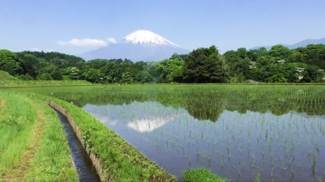 逆富士と水田に映る運河 - 水田点の映像素材/bロール