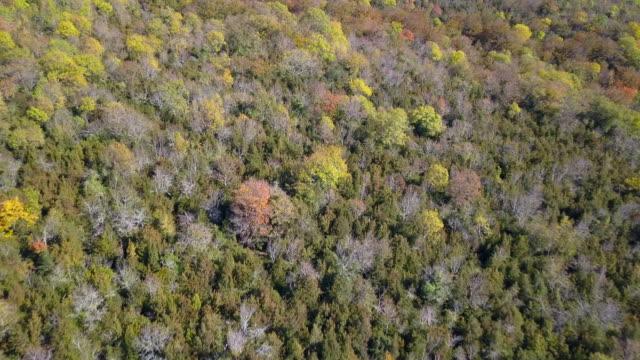 Irati Forest, Spain – film