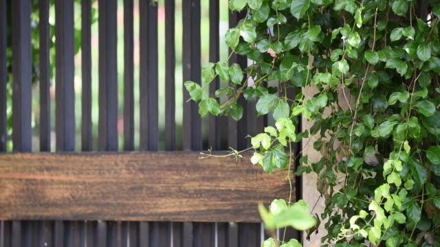 Iron door with green ivy around