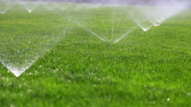 Irrigating herbe de l'eau d'arrosage - Vidéo