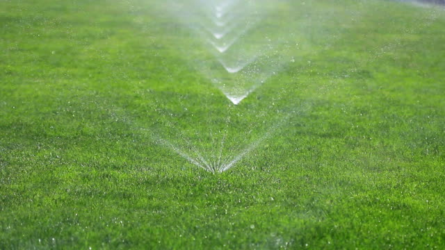 Irrigating grass with water sprinkler