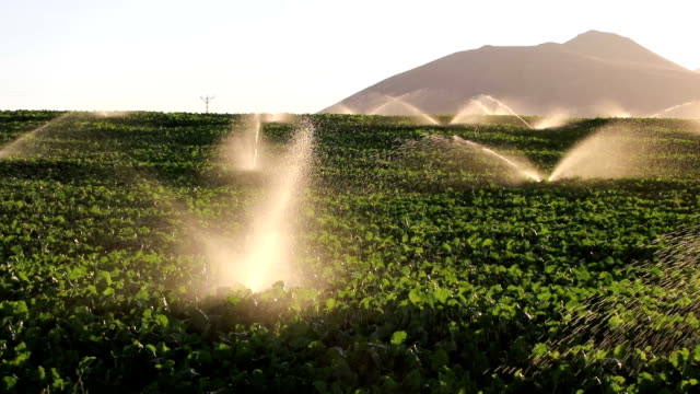 Irrigation Equipment, Agricultural Water Sprinklers Watering Farm Plants Crop Field video