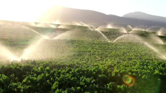 Irrigation Equipment, Agricultural Water Sprinklers Watering Farm Plants Crop Field Irrigation Equipment, Agricultural Water Sprinklers Watering Farm Plants Crop Field watering stock videos & royalty-free footage