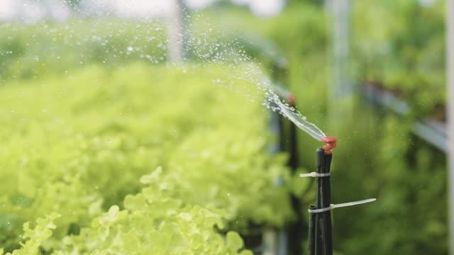 vídeos y material grabado en eventos de stock de equipo de riego en un jardín - botánica